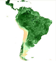 SPOT NDVI image composite over South America