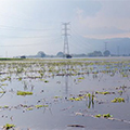 Damaged agricultural fields after extensive flooding
