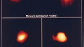 FOC images Mira binary system