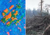 Forest damage (orange areas) caused by storm