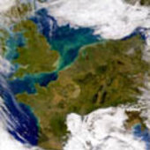 SeaWiFS's image of a phytoplankton bloom