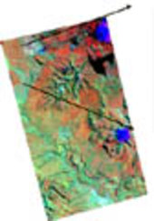 interferometric coherence image and Landsat TM
