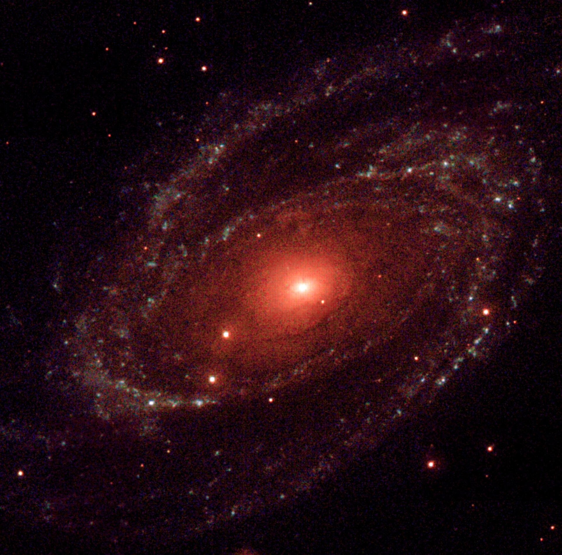 XMM-Newton's Optical Monitor ultraviolet image of the spiral galaxy M81