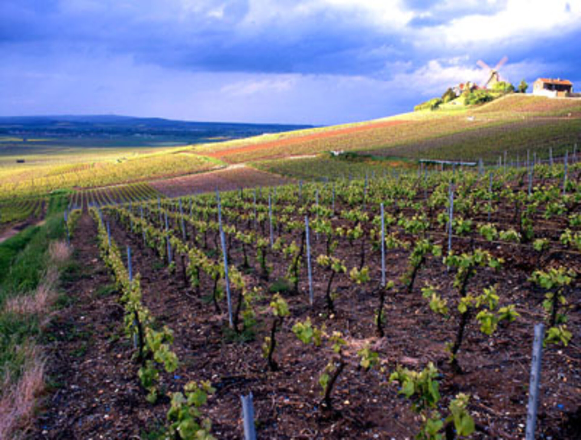 Europe's vineyards will be mapped by satellite