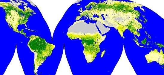 Global tree cover map