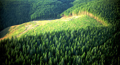 Forests cover one seventh of China