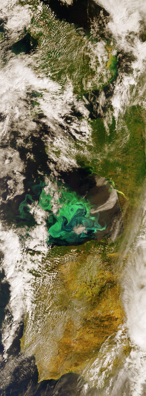 Algae bloom in the Bay of Biscay