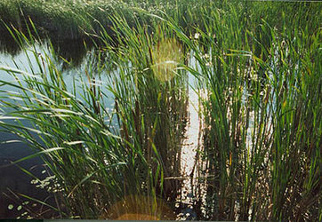 Wetlands are a global resource