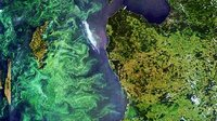 Bloom in the Baltic Sea