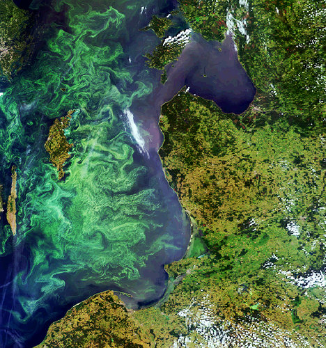 Envisat image of a phytoplankton bloom in the Baltic Sea