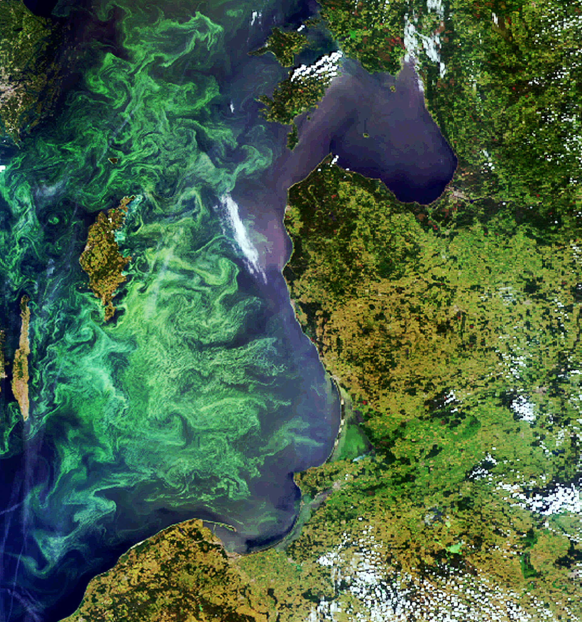 A phytoplankton bloom captured by Envisat