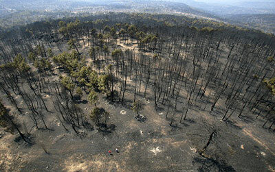 Guadalajara forest fire devastation