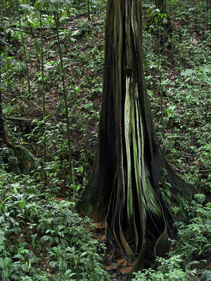 Carbon-storing forests need mapping for the Kyoto Protocol to work