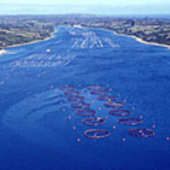 Salmon farms in Chile