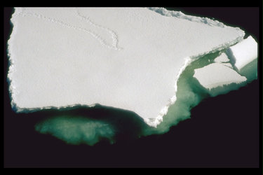 Sea-ice in the Antarctic