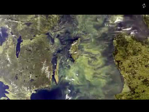 Plankton bloom in the Baltic
