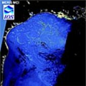 Sargassum as seen by MERIS