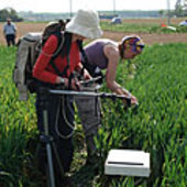 Taking hyperspectral measurements in a field of wheat
