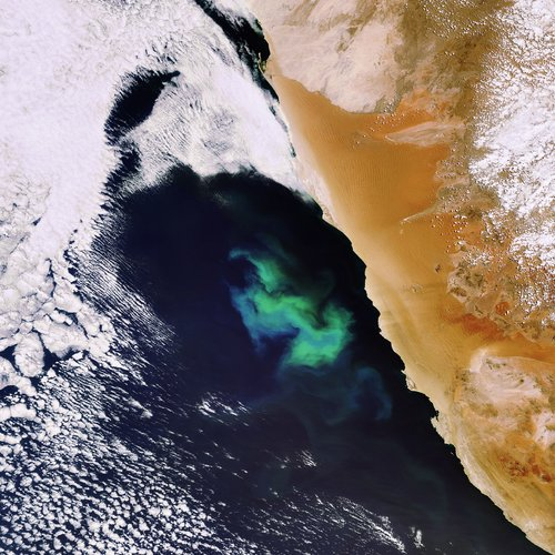Swirls of a plankton bloom captured by Envisat