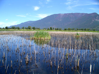 Creston Valley Wetlands, Canada