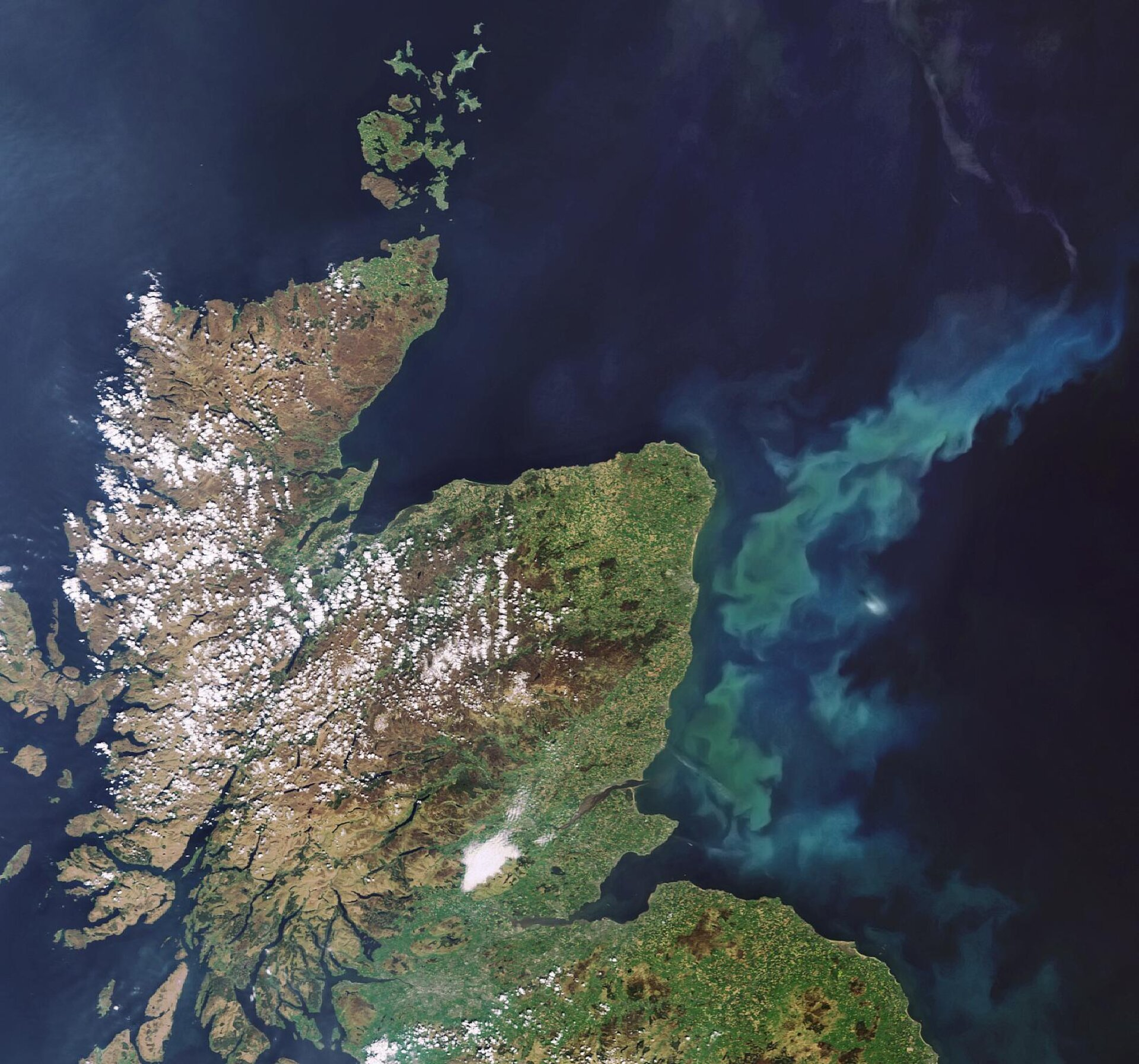 Phytoplankton bloom off the coast of Scotland