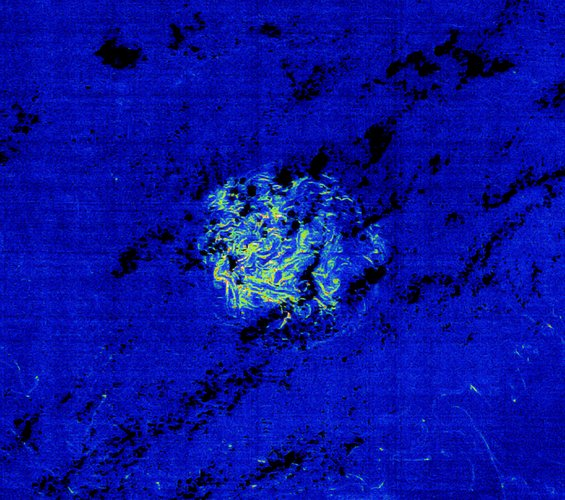 Envisat image of a patch of Sargassum