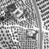 Olive groves seen by infrared camera
