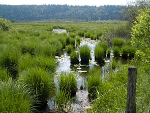 World Wetlands Day focuses on climate change / Space for our ...
