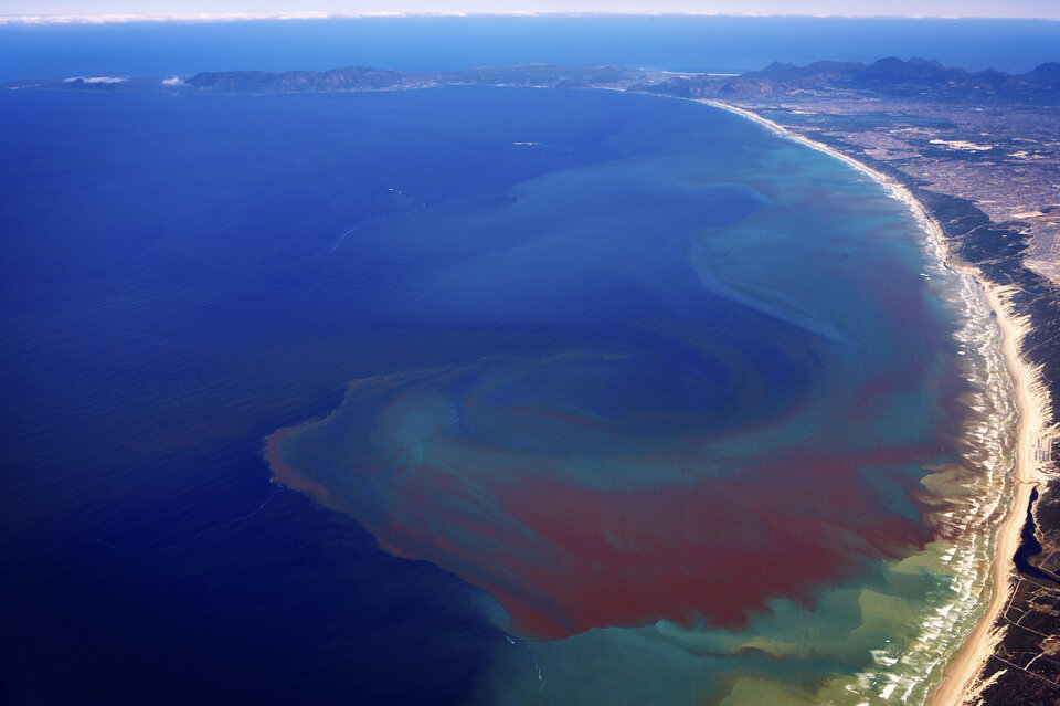 Red tides in Benguela upwelling