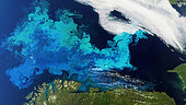 Phytoplankton bloom