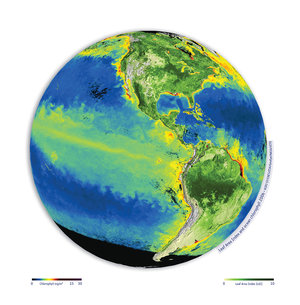 Global ocean chlorophyll and leaf area index