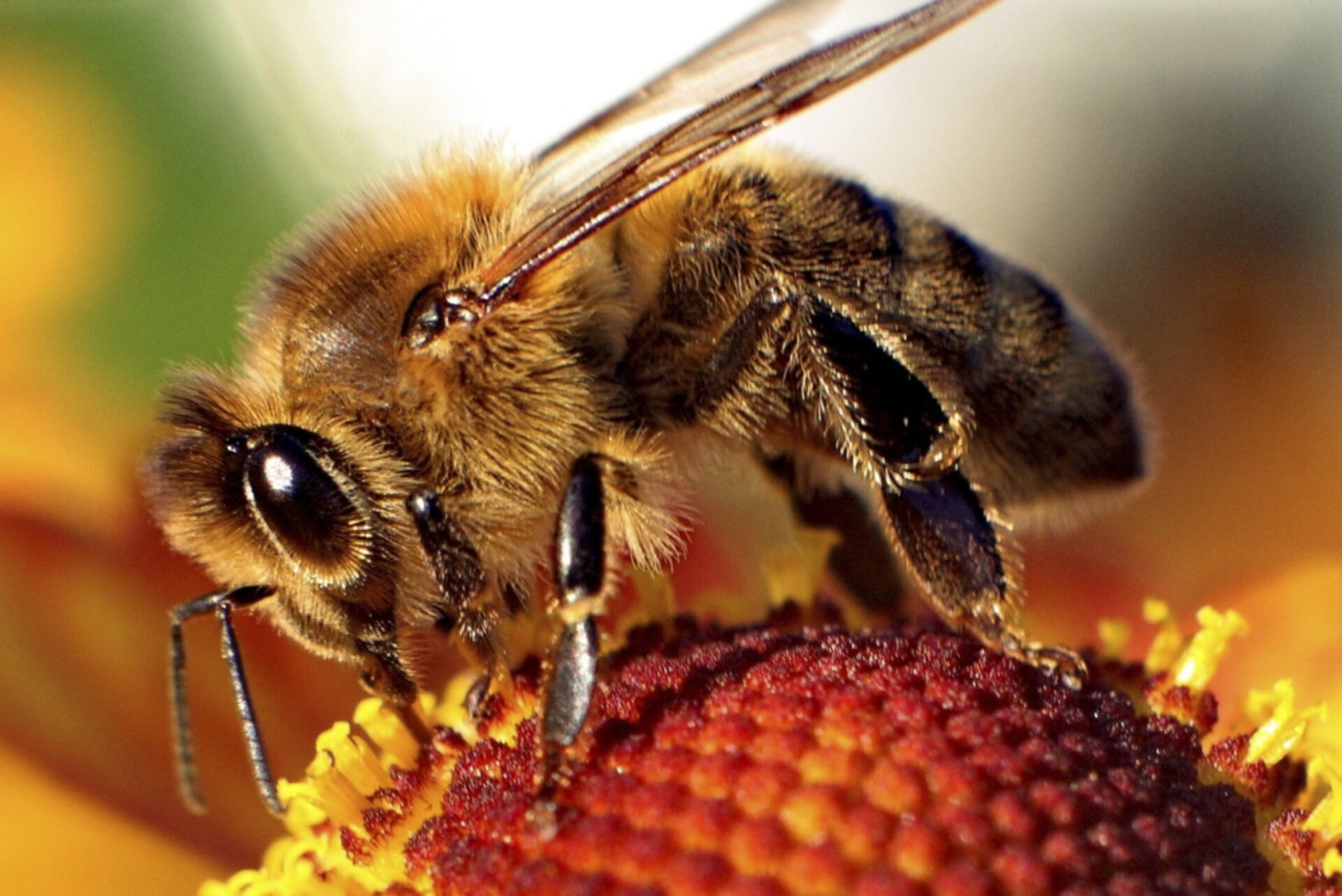 Honey_bee_pillars.jpg