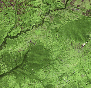 Deforestation in the DR Congo