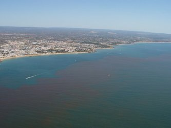 Red tide off the Portuguese coast