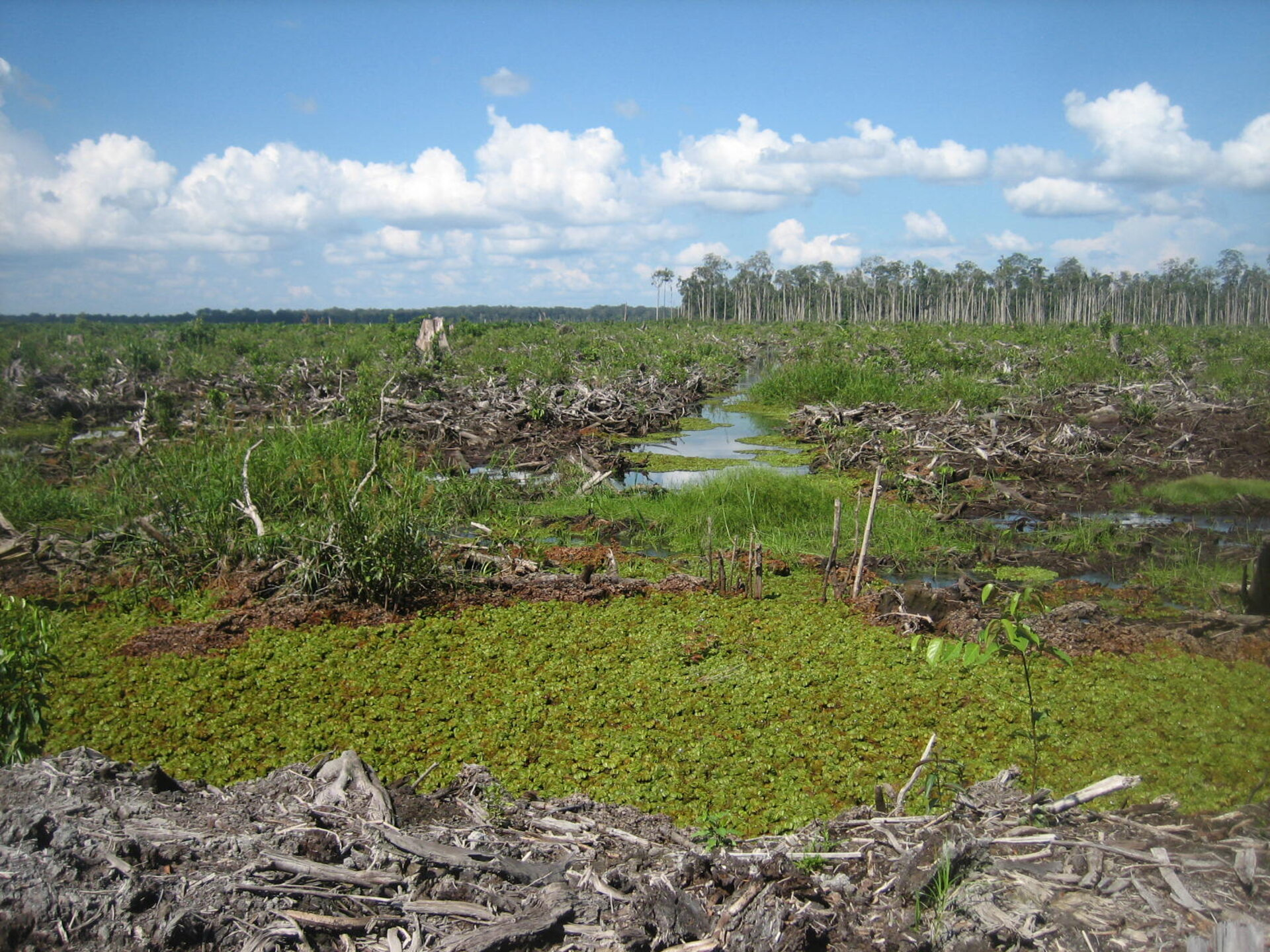 Deforestation damages peatlands
