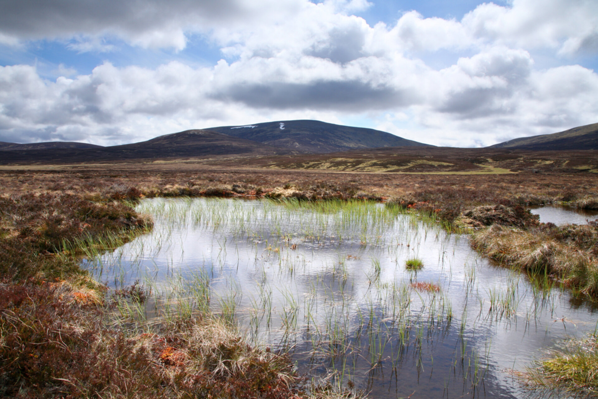 Peatlands play vital role in curbing climate change