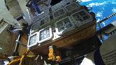 Antarktis - ISS - Düsseldorf: der lange Weg der Flechten