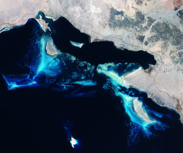 Red Sea reefs