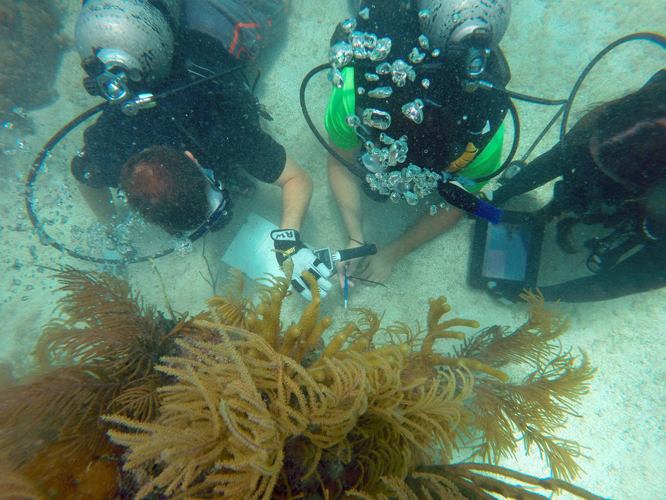Marine science training for NEEMO