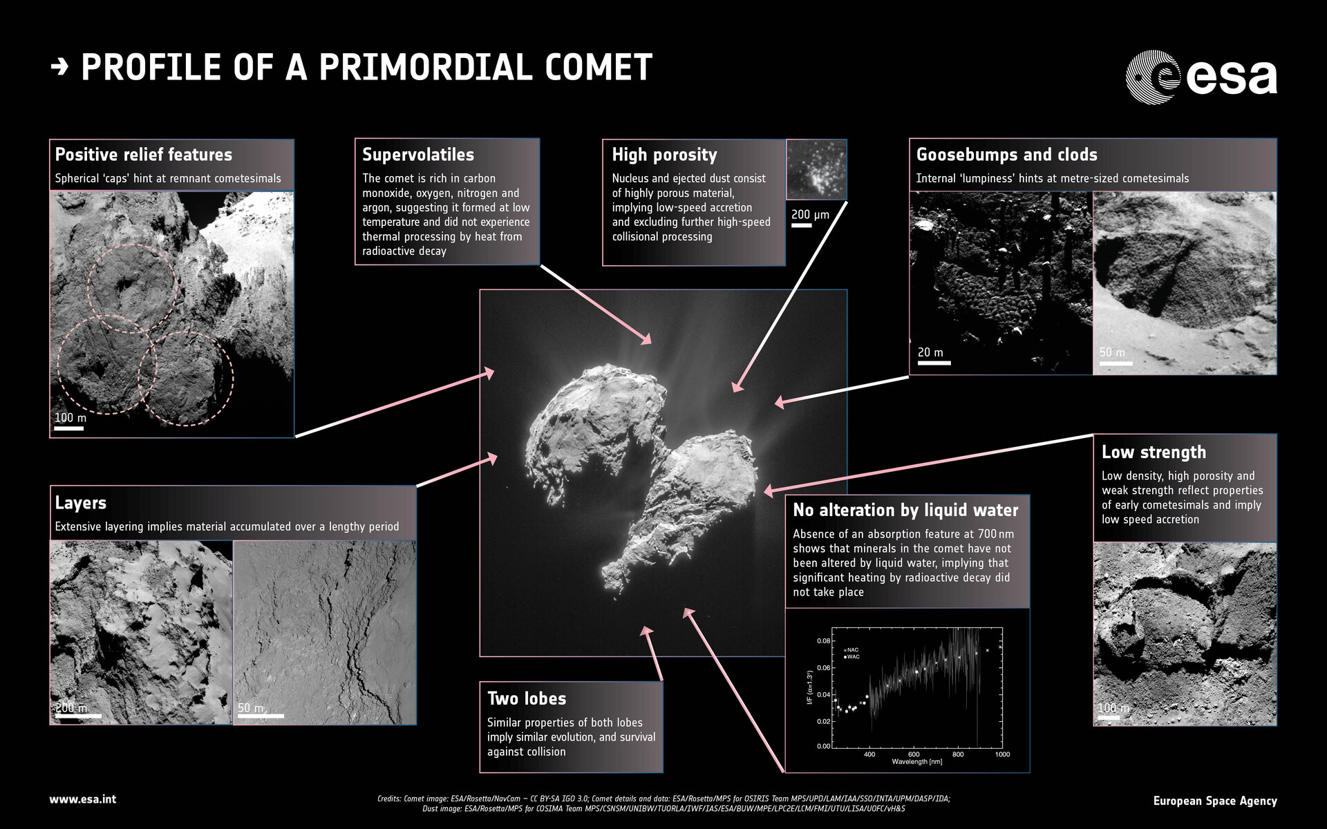 Profile of a primordial comet