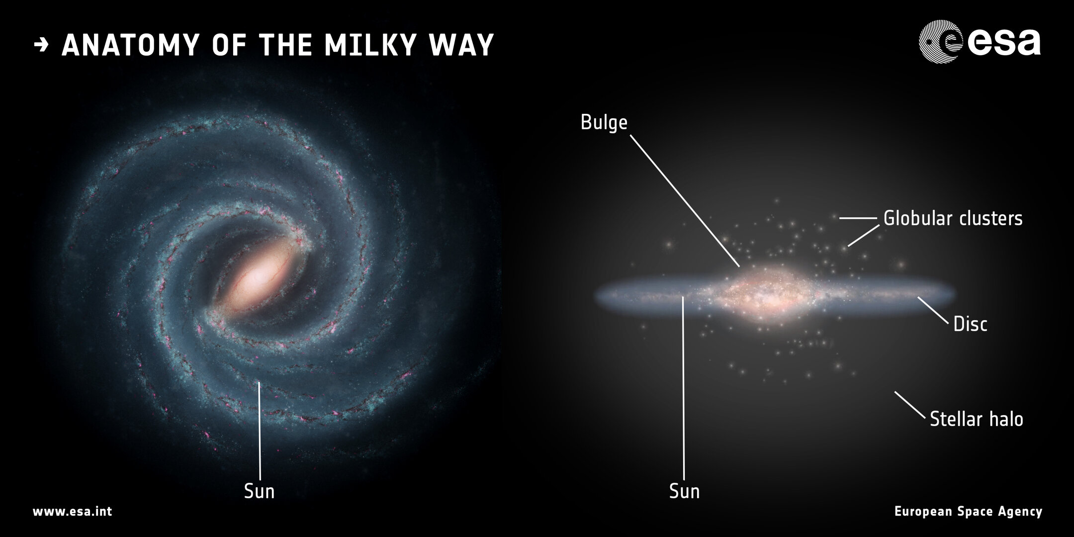 The components of the Milky Way