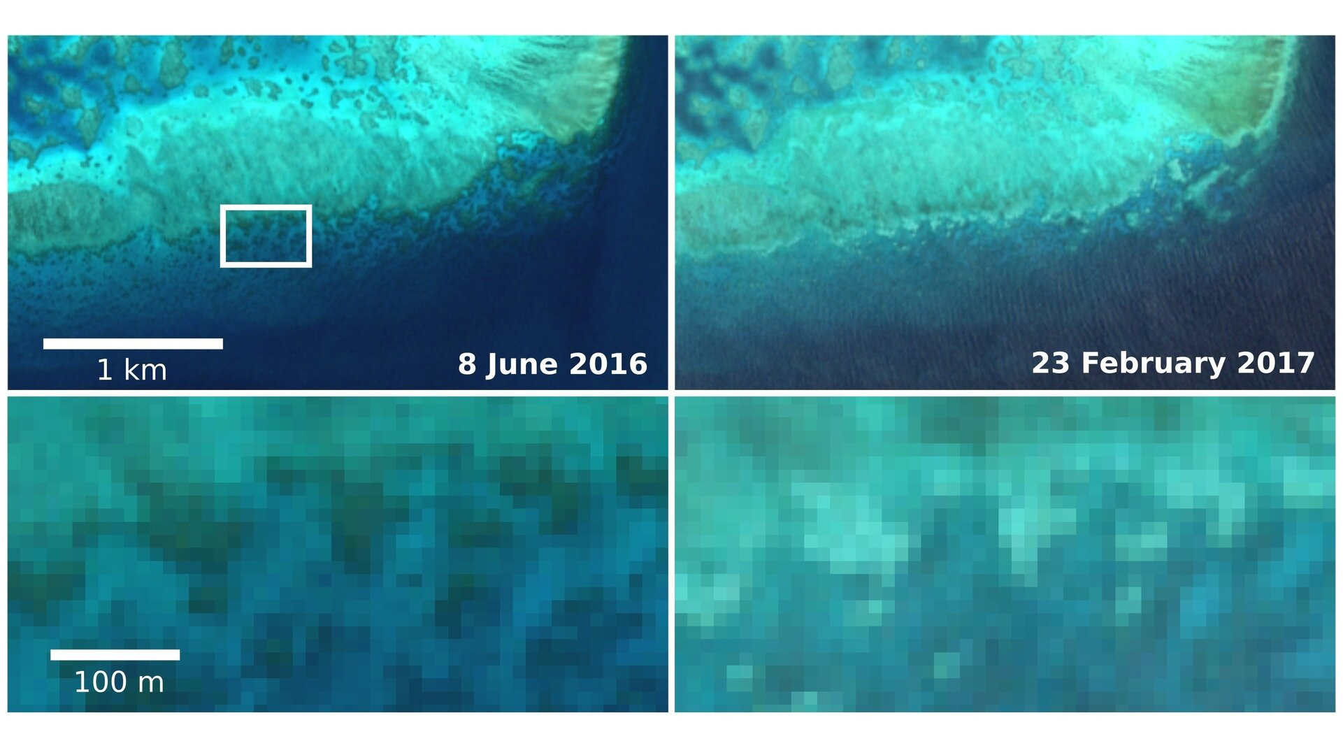 Esa Sentinel 2 Captures Coral Bleaching Of Great Barrier Reef