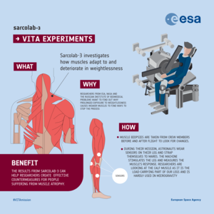 Sarcolab-3 experiment infographic