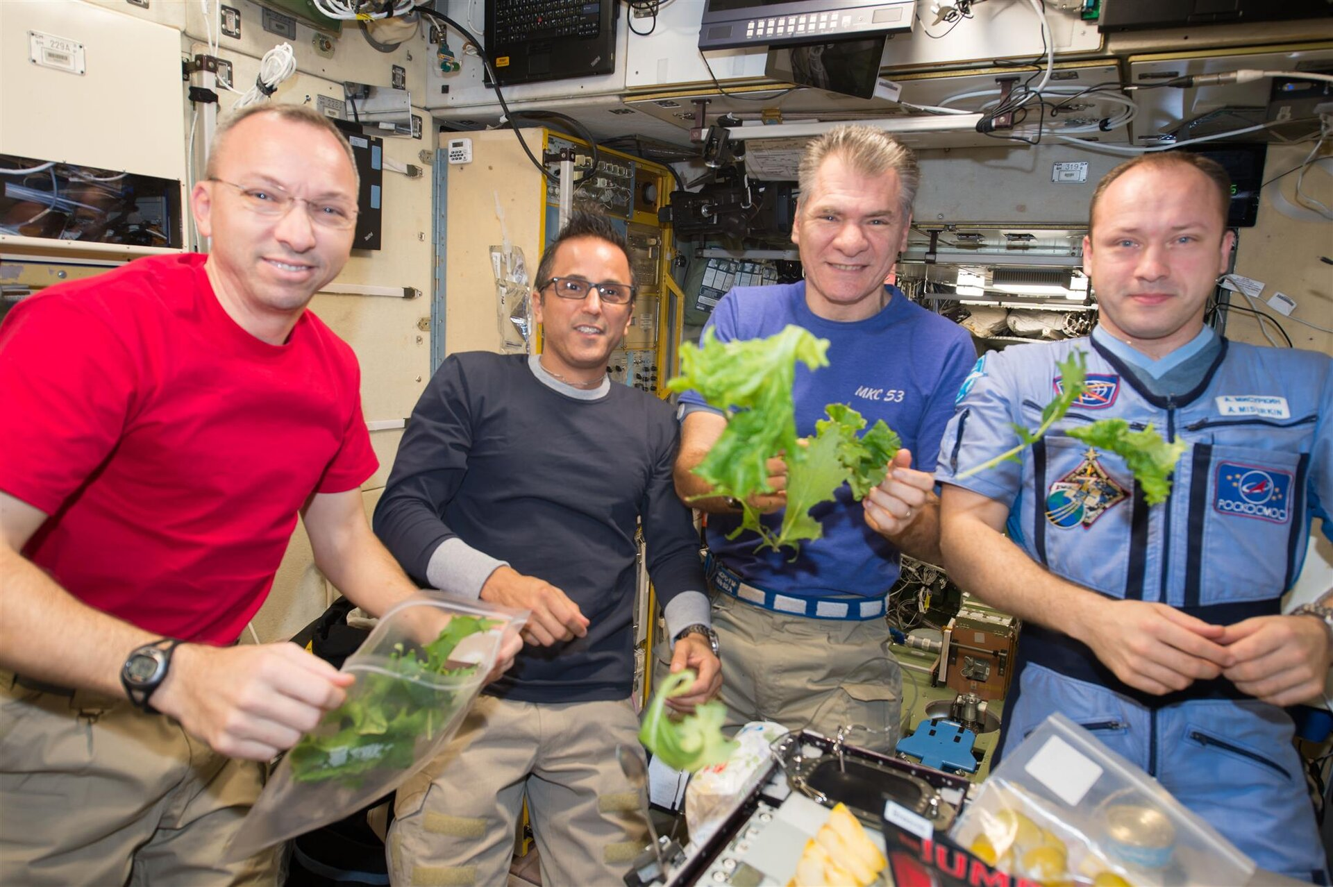 Space lettuce for dinner on the ISS