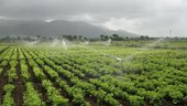 how much water is used for irrigation