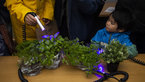 [1/9] Learning about plants and UV light