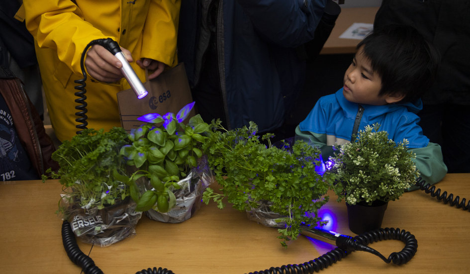 Learning about plants and UV light