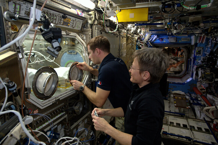 European Microgravity Science Glovebox