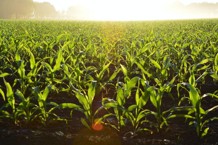 Water management key for sustainable agriculture