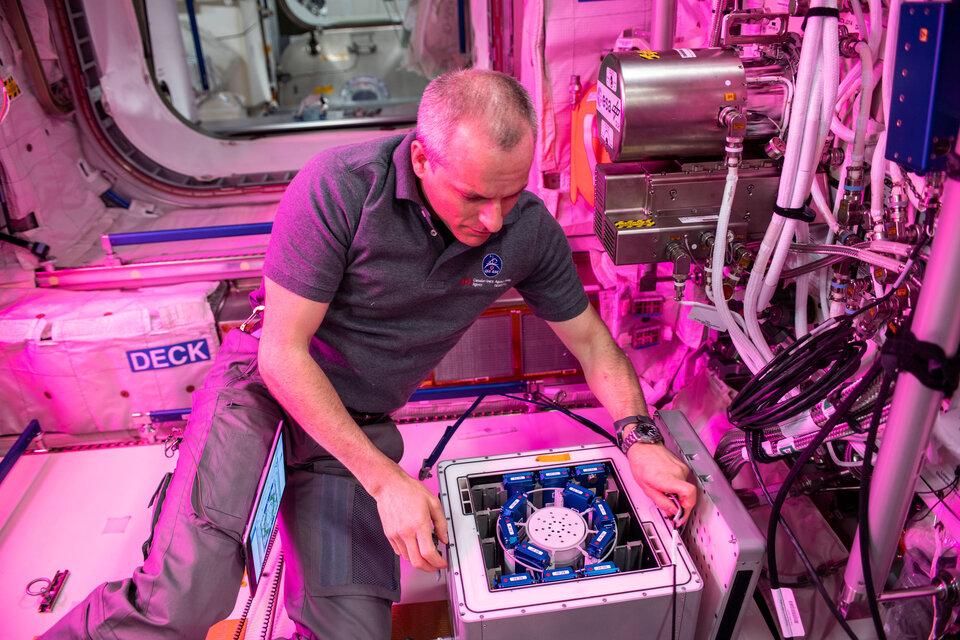 Installazione dell'esperimento nell'incubatore Kubic